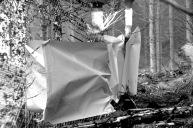 Wald Streben - Performance