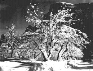 Half Dome Apple Orchard Yosemite