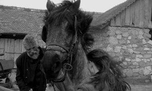 1342889354_turin_horse__2011__1