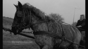Turin-Horse-BD_02